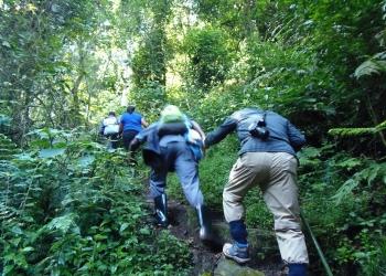 2 Nights 3 Days Gorilla Trekking Experience